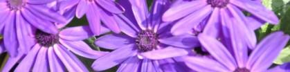 cropped-dsc_0932.jpg